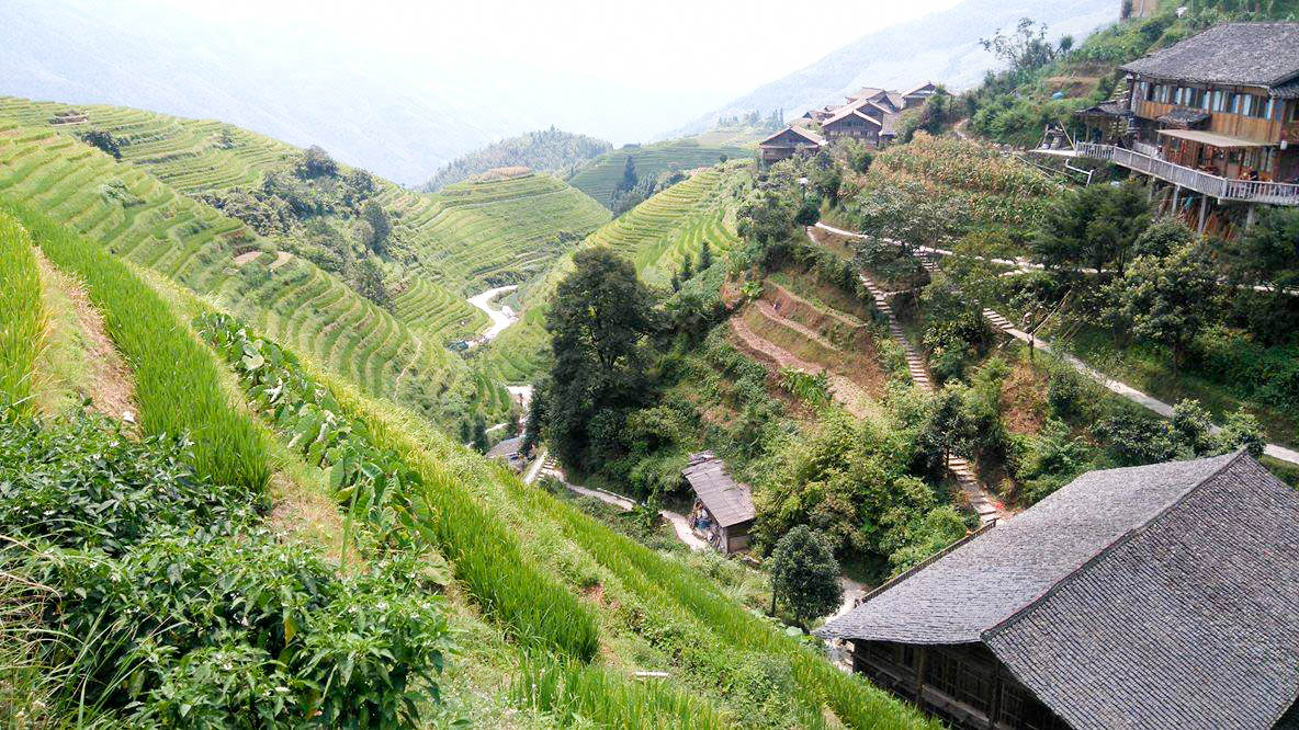 rice terraces in Lonsheng