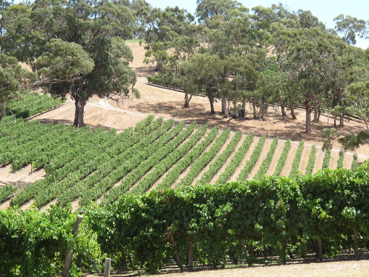 longview-winery-1364488_1280