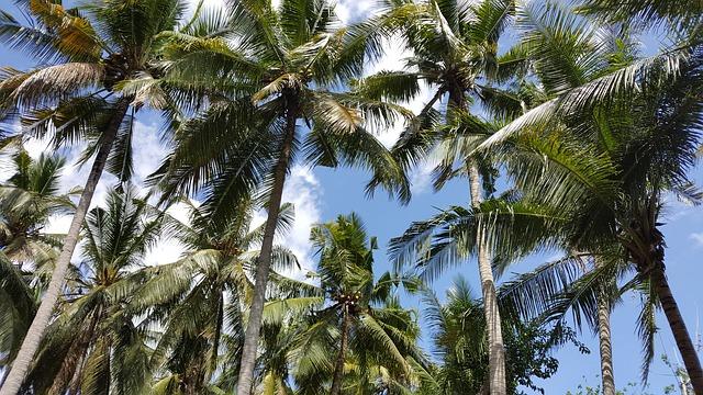 palm-1830110_640