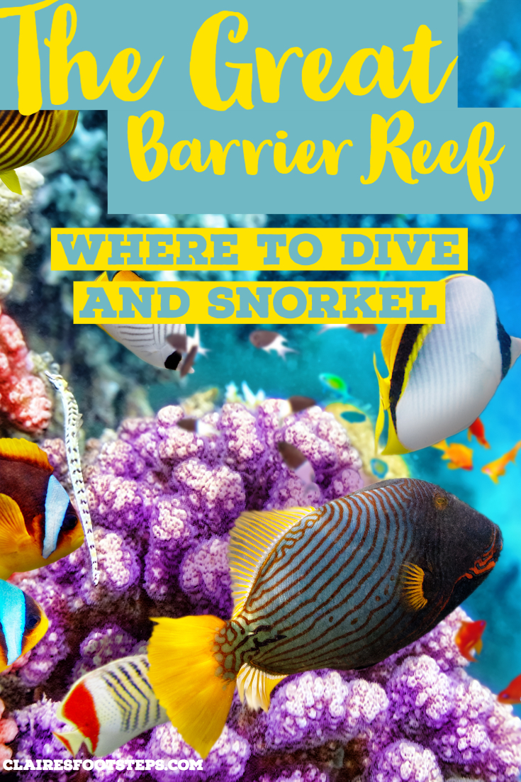 Are you wondering where is the best place to dive the Great Barrier Reef? Whatever your diving ability, you will find your perfect place to see the Great Barrier Reef - or the best place to snorkel the Great Barrier Reef! Check out this post for the best Great Barrier Reef tips and tricks to use when you are travelling the East Coast of Australia. #diving #australia